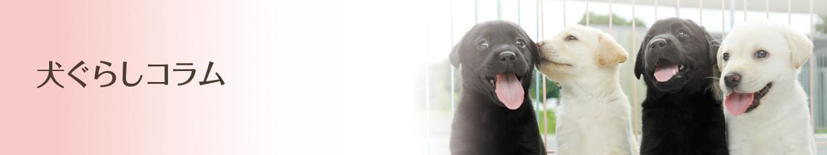 犬ぐらしコラム