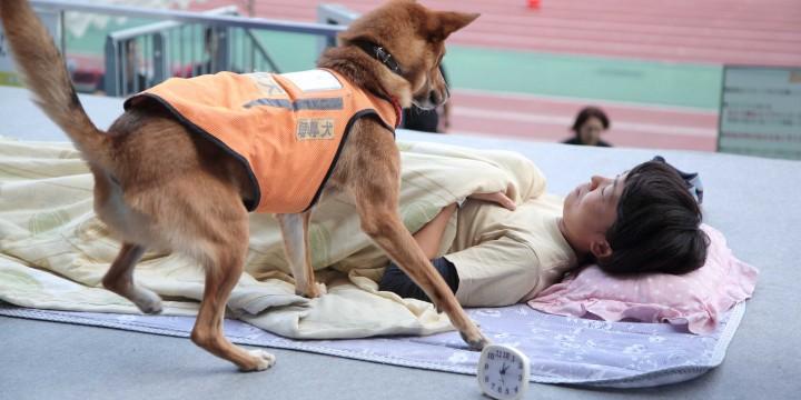 寝ている人を起こそうとする犬