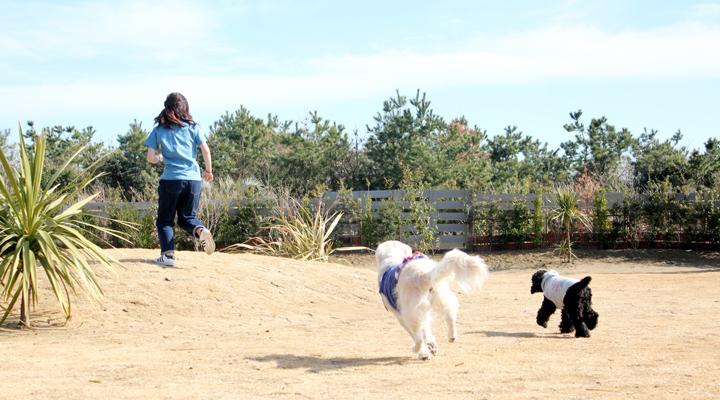 庭を走る犬2頭と人