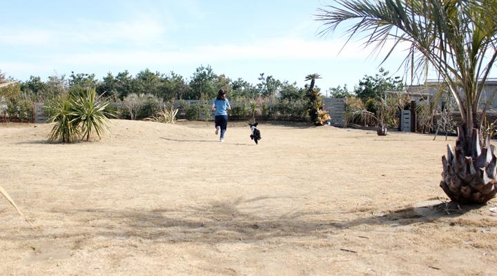 人と犬が庭を走る写真