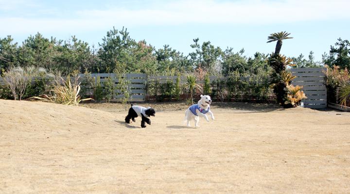 2頭の犬が走る写真