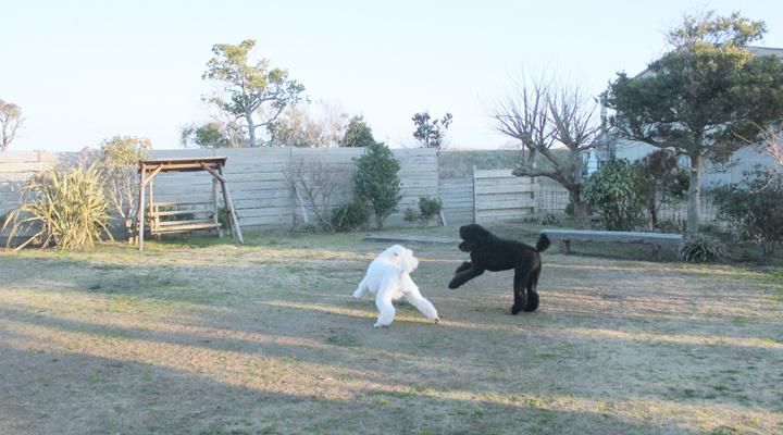 庭で遊ぶ犬たち