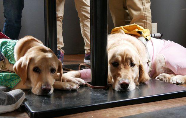 足元で伏せる盲導犬
