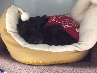犬がベッドの上で寝ている写真