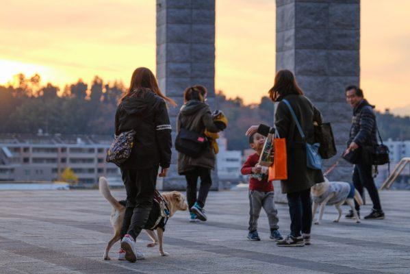 夕焼けの中スタジアムを後にする盲導犬ユーザー