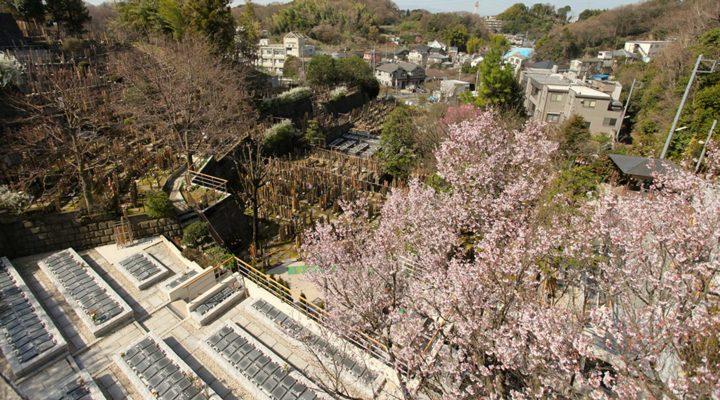 霊園全景の写真。桜が咲いている。