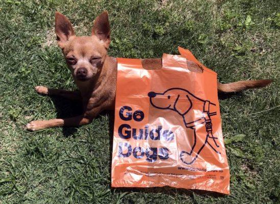 リサイクルワンツー袋と超小型犬のサイズ比較写真