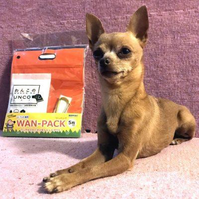 ウンチのニオイ対策、ニオイシャットアウト3点セットと小型犬の写真