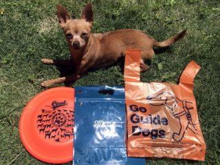 わんぱっくとワンツー袋と超小型犬とフリスビーディスクのサイズ比較写真