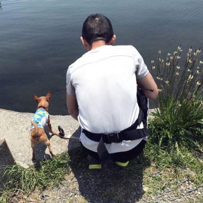 夏場の犬の散歩の写真
