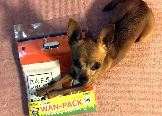ニオイシャットアウト3点セットと超小型犬の写真