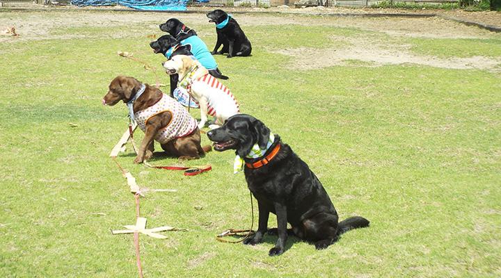 マテをする犬たちの写真