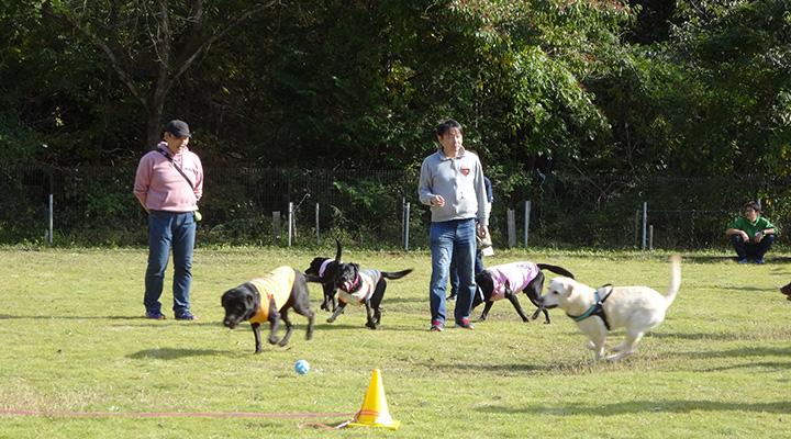 5頭の犬が、飼い主たちの周りで走り回る