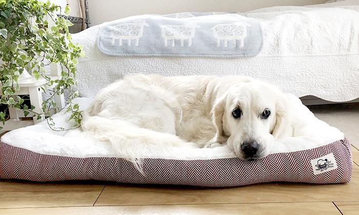 茶色の下地、白の座面の上に、白い犬が寝ている