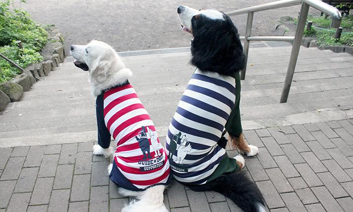 大型犬が2頭並ぶ。左に赤と白のボーダー、紺の袖のロンパースを着る白い犬。右に紺と白のボーダー、深緑の袖のロンパースを着る黒い犬。