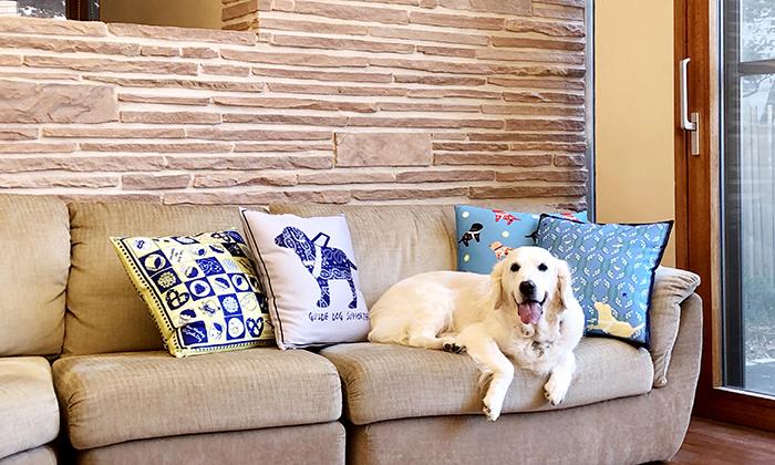クッションカバーがソファの上に4種類飾った画像