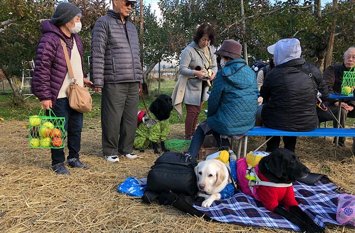 ベンチに座りリンゴを楽しむ盲導犬ユーザー