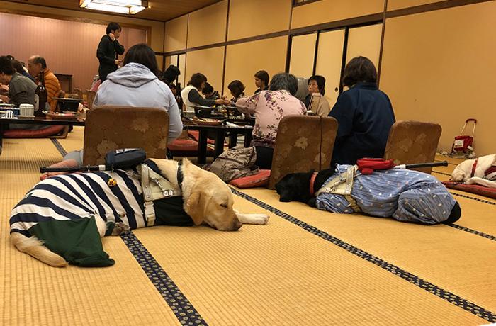 座敷で食事をするユーザーの後ろ姿。座敷の後ろには盲導犬が寝ころぶ