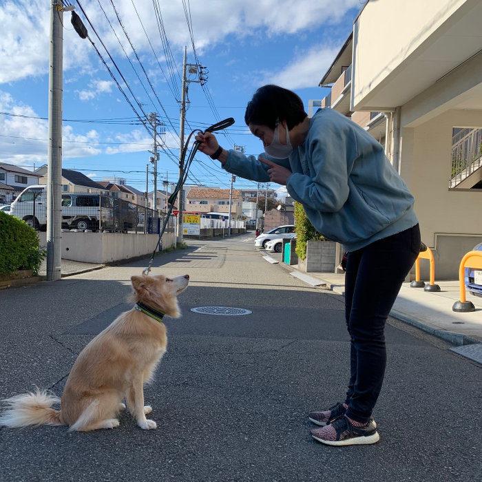 アイコンタクトを取る犬と人の写真