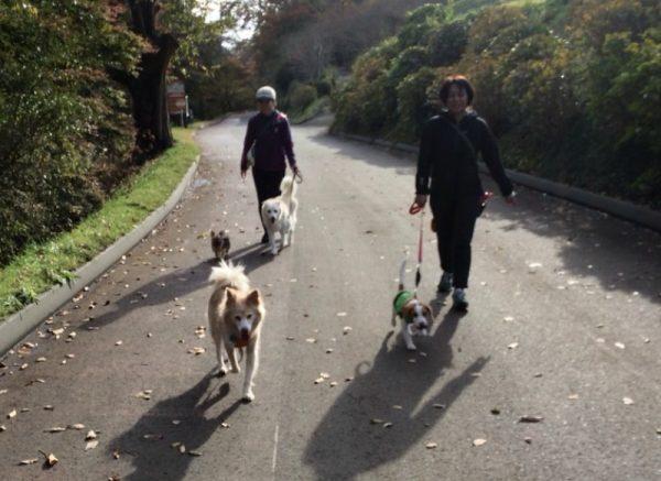 対犬トレーニングとしてのお散歩会の画像