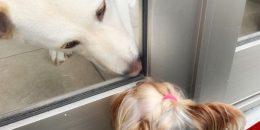 窓越しに見つめ合う犬たちの写真