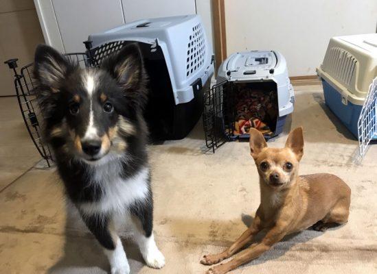 クレートと犬の写真