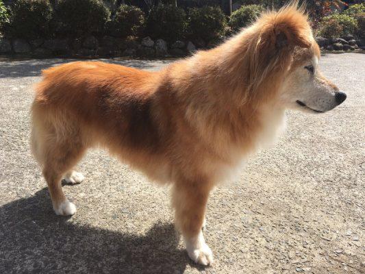 理想体型の犬ロックちゃんの画像