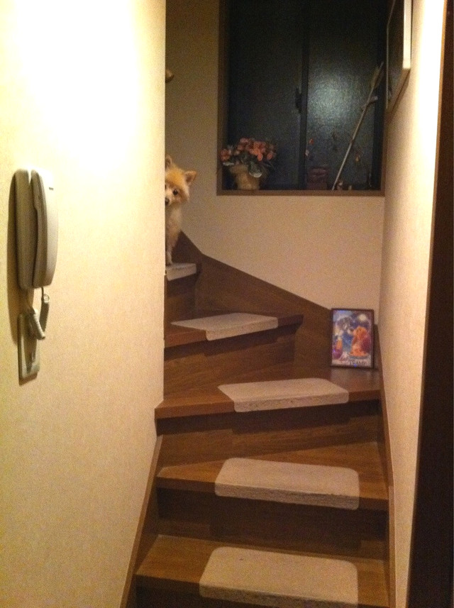 Image of stairs with anti-slip protection for dogs
